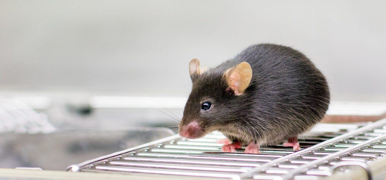 Scintica Instrumentation_mouse