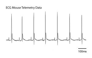 Kaha Sciences - ECG Mouse Telemetry Data